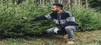 Nelson Christmas Tree Farm  Mendocino County Christmas Tree FarmChristmas Tree Cutting Nj