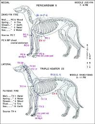 Canine Acupuncture Meridian Chart 20 Described Acupuncture Alarm Points Chart