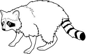 Small Picture Awesome Raccoon Coloring Page NetArt