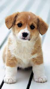 Cute Dog Wallpapers on WallpaperDog
