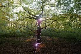tree trunk wrapped with lights