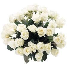 Afbeeldingsresultaat voor witte rozen