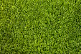 having a surface made of synthetic grass or astroturf will certainly reduce the time made performing maintenance compared to having traditional turf