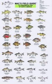 Freshwater Fish Chart Mfg Freshwater Fish Of North America