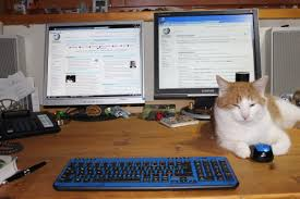 Image result for cat computer