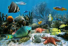 Interesting And Educative Water Animals Information For Kids