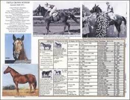 Horse Pedigree Chart Details About Horse Racing 7th Triple Crown Winner Assault King Ranch Picture Pedigree Chart