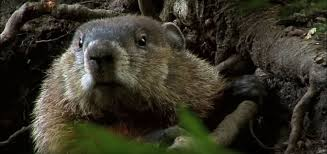 how to keep groundhogs out of my garden.  Keep This Is Diplomatic Solution That In Practice Means Giving Them Something To  Keep Others For Yourself What We Propose Here Plant One Garden  In How To Keep Groundhogs Out Of My Garden O
