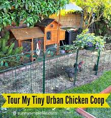 Best 25 Small Chicken Coops Ideas On Pinterest  Small Chicken How To Keep Backyard Chickens