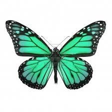 En Couleurs Imprimer Animaux Insectes Papillon Num Ro 158552