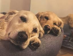 Was kann passieren, wenn diese tipp: Hunde Sollten Treppen Meiden Stimmt Das Lill S Dog Blog