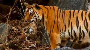 5 Amazing <b>Animal</b> Behaviours Caught on Spy Camera | BBC Earth ...