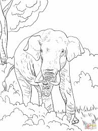 Small Picture Elephants Coloring Page Elephant Coloring Pages Free Elephant Dr