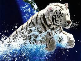 Tiger wallpaper, Tiger pictures ...
