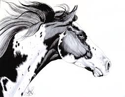 horse head drawing. Delighful Head Drawing  Overo Paint Horse By Cheryl Poland And Head D