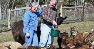 Steve & Priscilla Weaver of Saltmarsh Ranch with their British Soay flock.  | Ranch, Southern oregon, Sheep