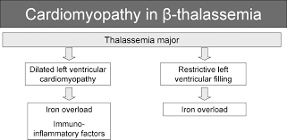 Thalassemia Cardiomyopathy Circulation Heart Failure