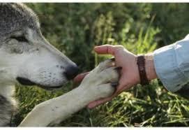 """Résultat de recherche d'images pour """"hommes et loups"""""""