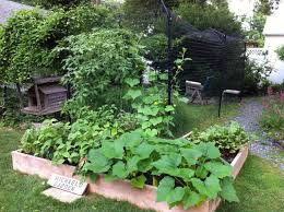 Kitchen Gardening Vegetable Gardening Tips For The Dog Days Of Summer Edible Long