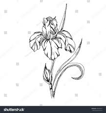 Vector Decorative Iris Flowers Coloring Pages Stock Vector Royalty