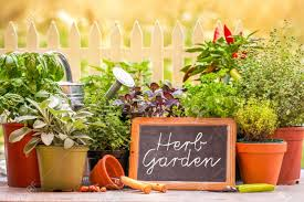 Herb Garden Herb Garden Pots