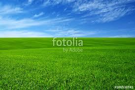 green grass field. Green Grass Field