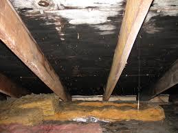 attic mold remediation cost. Wonderful Remediation Black Attic Mold  Ceiling Franklin MA With Remediation Cost R