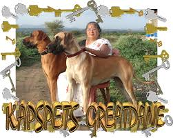 a dog is for life and deserves mitment please do not purchase a puppy just because it is the latest fad or trend great dane chion