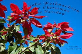 Frohe Weihnachten Feliz Navidad Happy Christmas