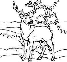 Small Picture Deer coloring pages in the jungle ColoringStar