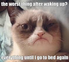25 Hilarious Grumpy Cat memes for your Friday (25 Photos) via Relatably.com