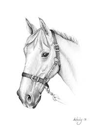horses drawings in pencil step by step. Delighful Drawings Pencil Drawings Of Horses With Horses In Step By C