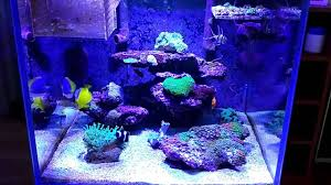 hinterfeld shark marine reef c aquarium programmable led lamp light you