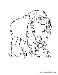 Coloring Pages Forest Animals Forest Animals Coloring Pages 37 All The Wild Animals Of The World