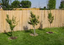 How To Plant A Hedgerow  Tenth Acre FarmFruit Tree Hedgerow