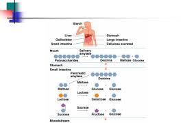 Iubmb Nicholson Metabolic Pathways Chart Chapter 23 Metabolic Pathways For Metabolic Pathways And