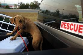 Oregon House Bill Would Prohibit Unsecured Dogs Riding in Back of ...