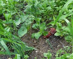 bird netting for garden. Simple Garden Bird Netting For Gardens U0026 Crops Intended For Garden A