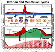 Fertility Hormone Levels And Sperm Parameters Monitoring