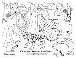 Amazon Animal Coloring Page Best Free Coloring Pages Site