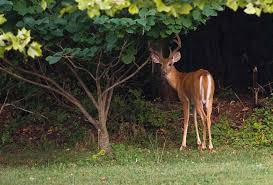 keeping deer and other pests out of