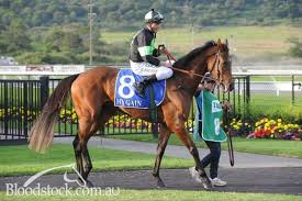 Bloodstock listing - This SYDNEY Trained 3yo FILLY was an $80000 Yearling,  who's only had 3 Starts! - Bloodstock.com.au