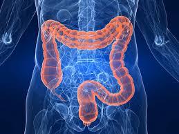 Imagini pentru colon