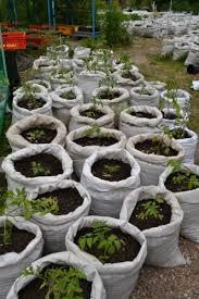 garden in a bag. Garden In A Bag E