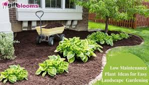 low maintenance plant ideas for easy