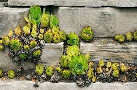 Small Picture Lofty Design Succulent Garden Design Beautiful Landscaping Garden