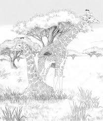 Safari Giraffen Kleurplaten Pagina Afbeelding Voor De Kinderen