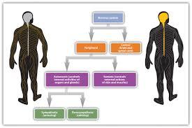 Endocrine Medications NCLEX Practice Quiz     items  SlideShare
