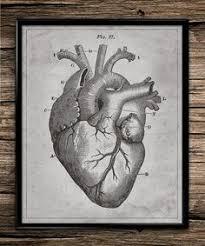 vintage heart anatomy human body cardiac cardiology heart surgery antique patent medical home decor office decor wall art print nurse gift anatomy home office
