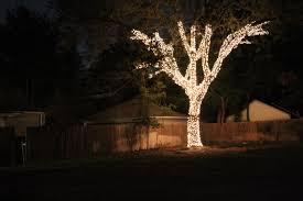 tree lighting ideas. Lighting:Engaging Tree Ideas Outdoors Christmas Indoor Garden Outdoor Palm Outside Light To Hang Lights Lighting A